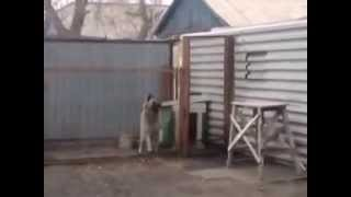 Dancing Russian dog. You must see it.