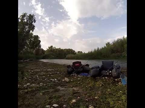 Pesca de siluros en el Cinca (piratas del cinca)