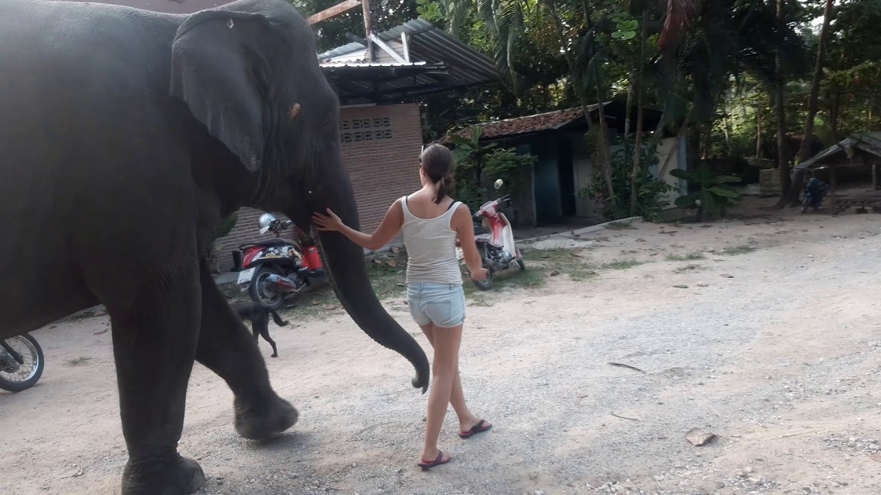elefánt szexvideó