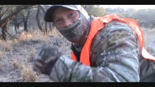 Mountain lion hunt at 11 yards