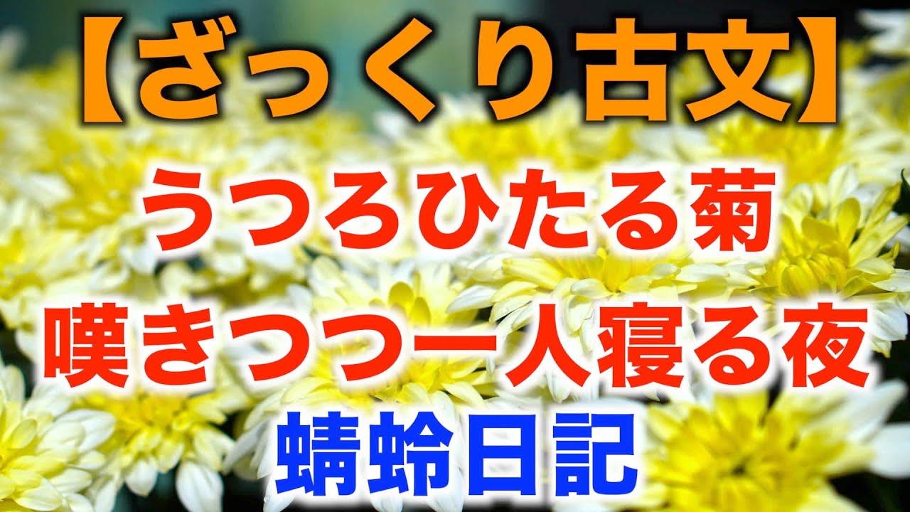 うつろ ひたる 菊 現代 語 訳