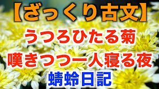 ひたる 菊 蜻蛉 日記 現代 語 訳 うつろ