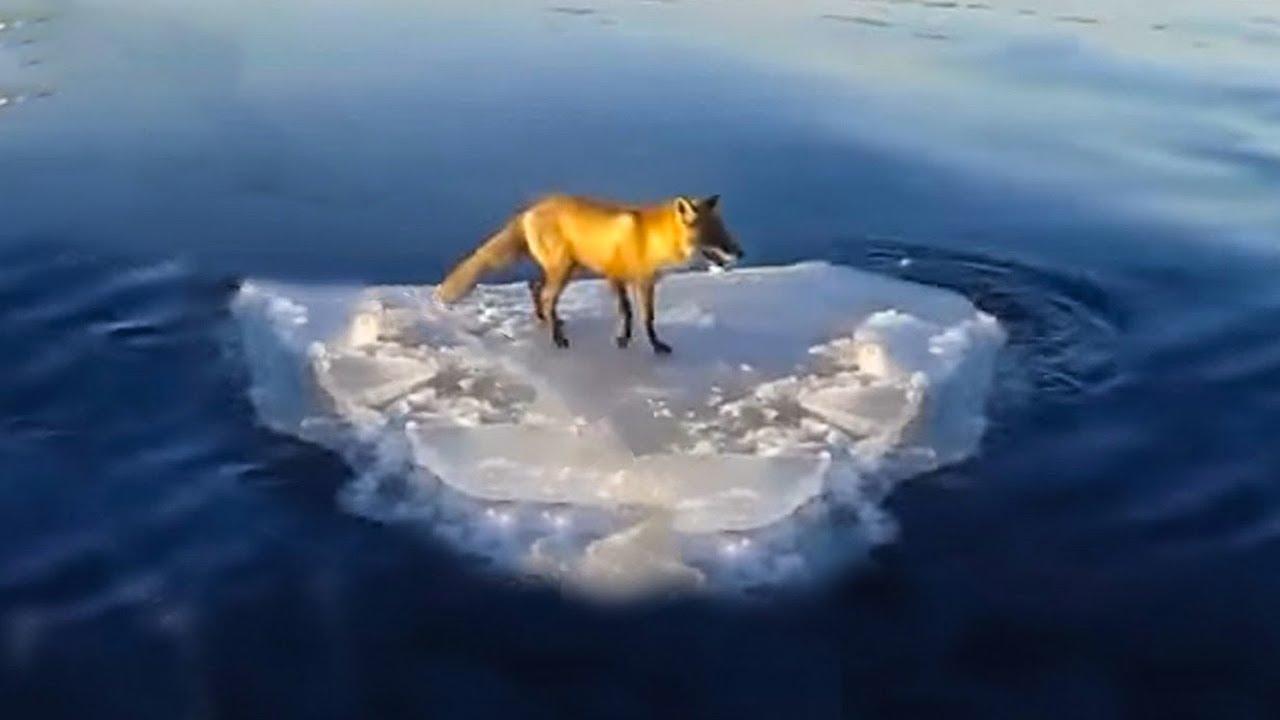 ???? 10 unbelievable animal rescues