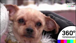 Стрижка под мартышку: в Дубне обсуждается история неудачного груминга собаки