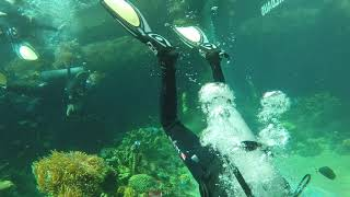 Divers Clear Litter From Aquarium With Plans to Tackle Marine Debris