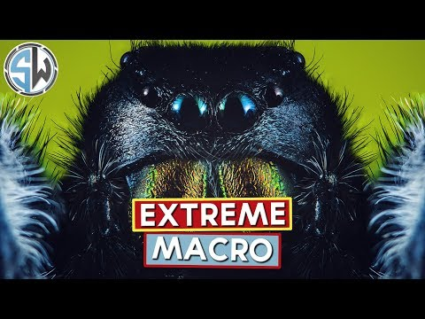 an-introduction-to-extreme-macro-photography---kind-of!