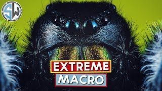 An introduction to extreme macro photography - Kind of!