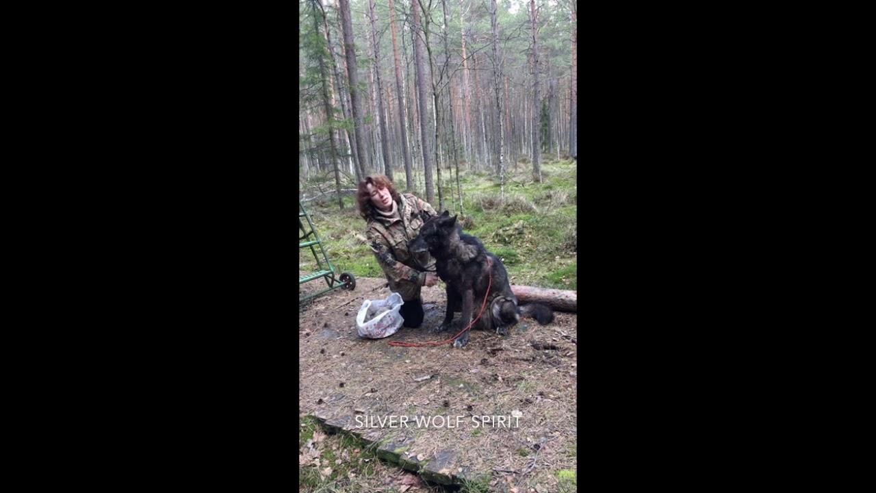 Рассказ заводчика о Русском вольфхунде