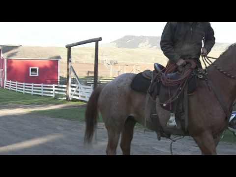 North of the Border Buckaroos Trailer