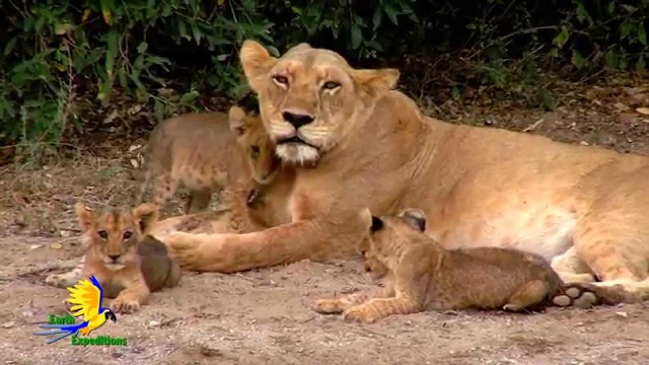 Earth Expeditions Kenya Cincinnati Zoo Youtube