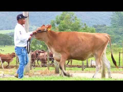 LOTE 20   6093,6105