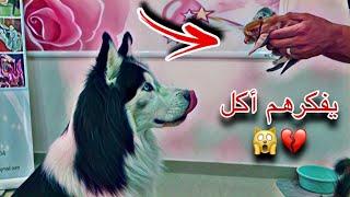ردة فعل جاك لما شاف قطط صغيره لاول مره بحياته !! 😱