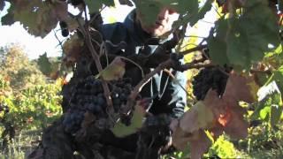 Domaine Val Auclair vins issus de l'agriculture biologique