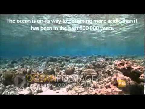 Ocean Importance