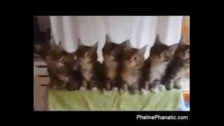 Synchronized kittens!