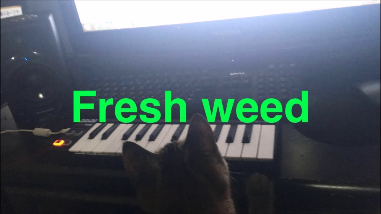 how to keep weed fresh