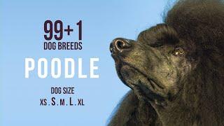 Poodle / 99+1 Dog Breeds