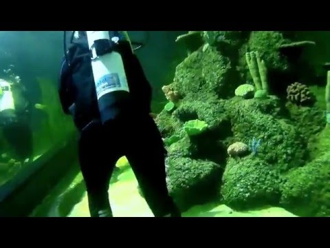 Skegness Aquarium Dive Experience