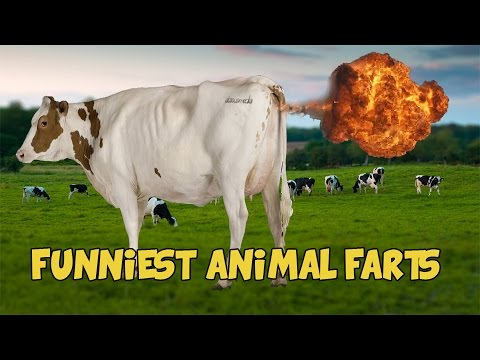 Funny animals farting by FactsForYou