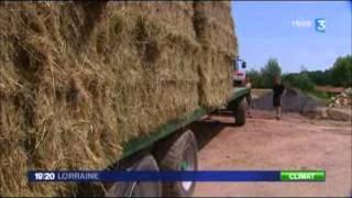 Reportage de France 3 Lorraine - JT 19/20 du 12 juillet 2011