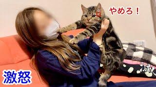 飼い主への匂いチェックが激しすぎて激怒され逆ギレしてしまった子猫w