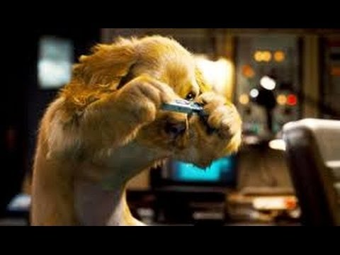 Como Perros Y Gatos 2 La Revancha De Kitty Galore Película Completa en Español Latino