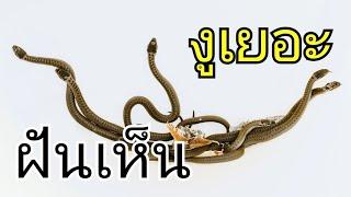 ฝันเห็นงู EP 6 ทำนายฝัน ฝันเห็นงู งูเยอะ เลขนำโชค เลขเด็ด เลขมงคล