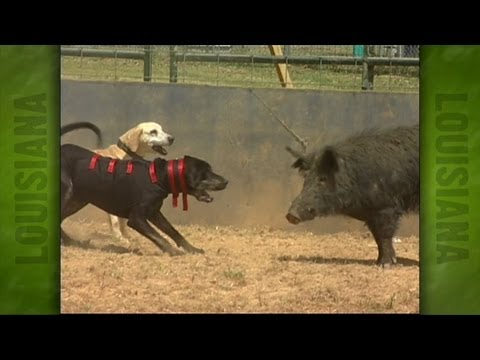 Uncle Earl's Hog Dog Trials (2004)