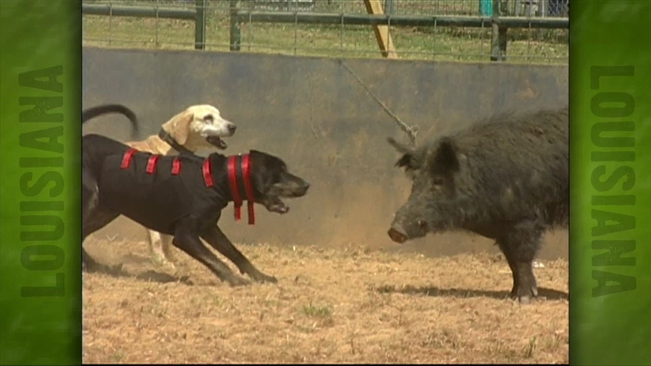 When Is Uncle Earl S Hog Dog Trials