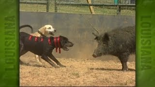 Repeat youtube video Uncle Earl's Hog Dog Trials (2004)