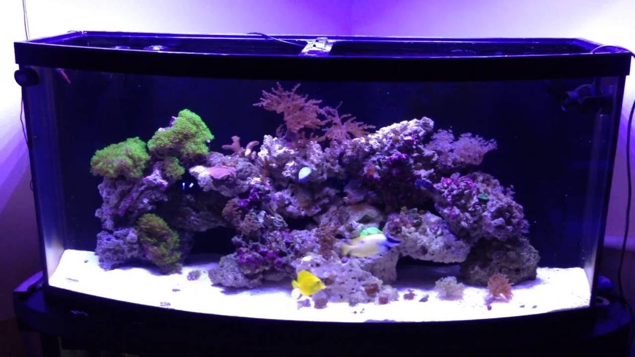 72 Gallon Bowfront Reef Tank Youtube