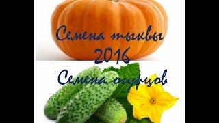 Семена ТЫКВЫ и семена ОГУРЦОВ 2016!(Данные семена я буду сеять в 2016 году! Всем советую, приятного просмотра!, 2016-02-11T13:14:24.000Z)