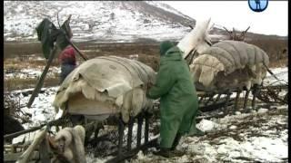 Коми. Путовање кроз Арктик