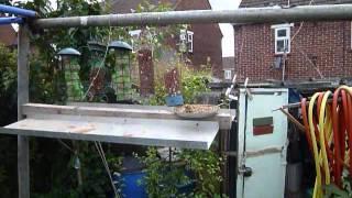 Gvb1939a Bird Feeder Rebuild  Tray Update