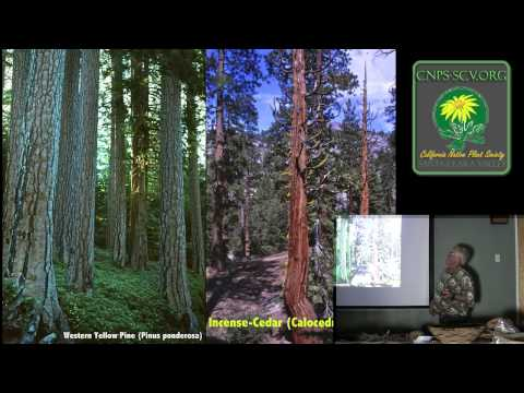 California Ethnobotany: Historical Uses of Native Plants