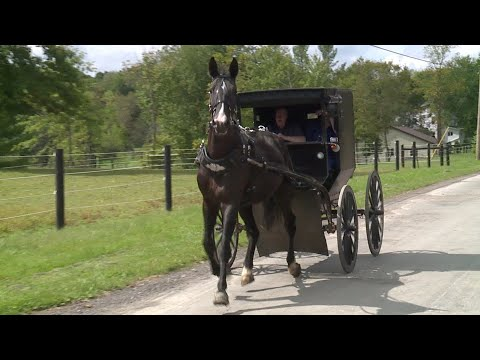Two Amish Men Flee From Deputies After Being Spotted Drinking While Driving Buggy