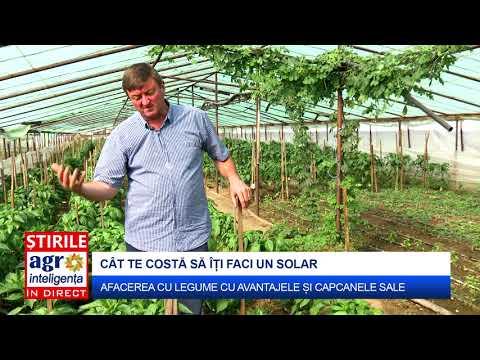 Cât costă să îți faci un solar de legume