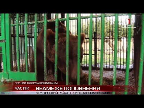 Реабілітаційний центр бурого ведмедя поповнився ще на дві особини