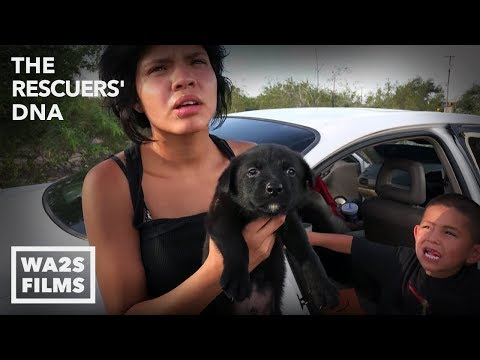 Puppies Sold By Family From Mexico Create Animal Jam With Stray Dogs Everywhere! Ep 12 Rescuers DNA