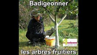 Badigeonner les arbres fruitiers - Les 4 Saisons du jardin bio