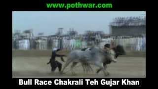 bull race chakrali teh gujar khan 26 may 2012