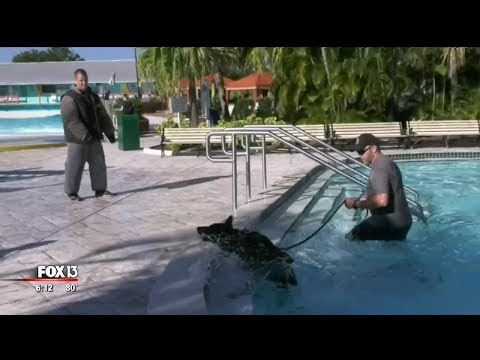 Nick Wize - Tampa K9's Train At Adventure Island Water Park