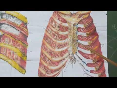 Болит грудино реберный сустав