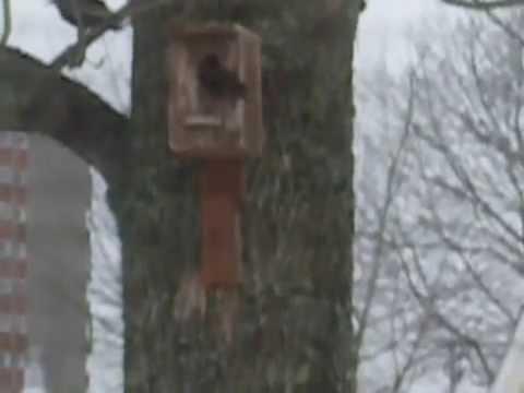 Unique Bird Houses (Tweet tweet..)