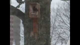 Unique Bird Houses (tweet Tweet..)