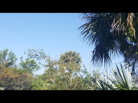 eyby-easter-walk-in-the-woods-finding-florida-wild-coffee-on-the-path-to-the-wild-banana-groves