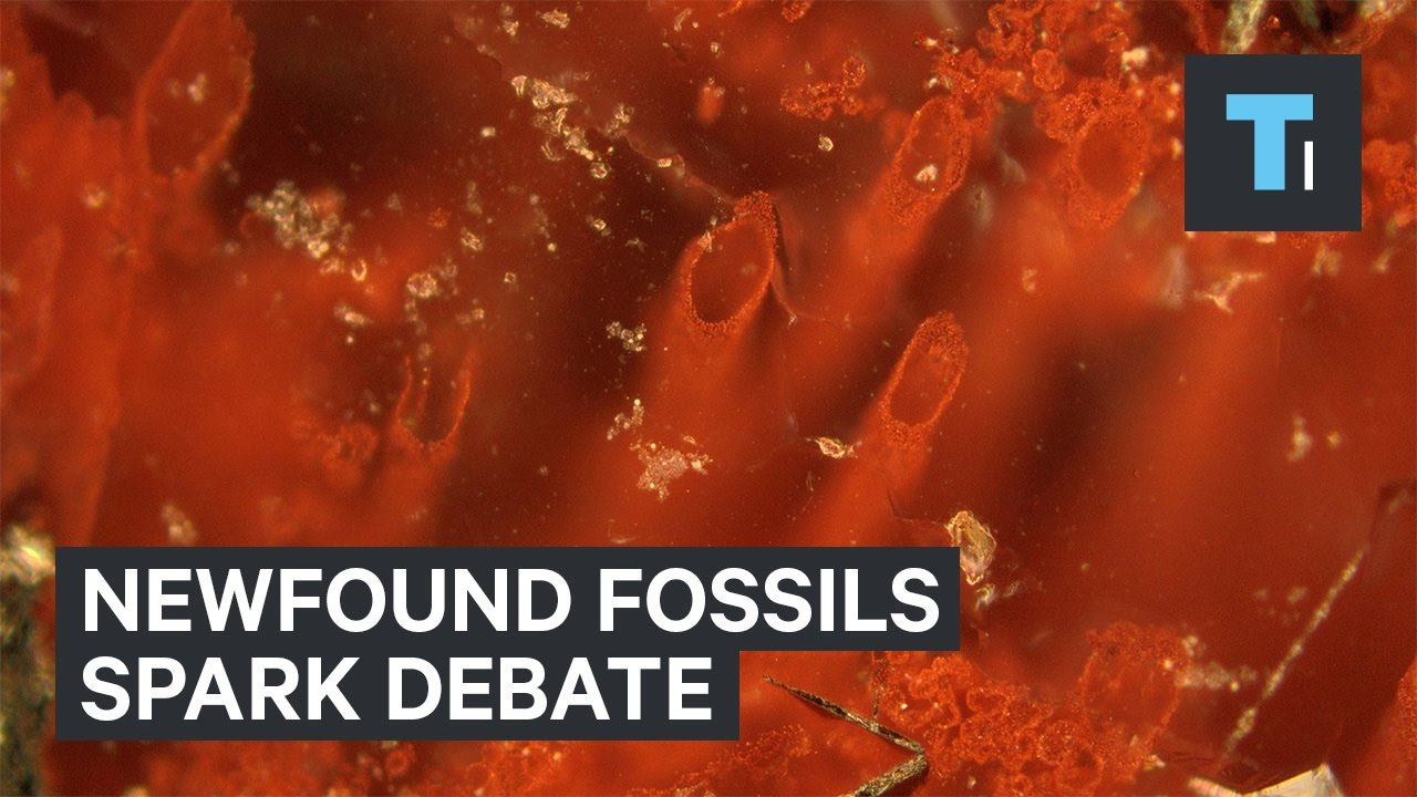 Scientists may have discovered the world's oldest fossils — it's sparking a huge debate