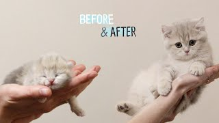 ✔ HOW Baby Kitten Amelia GROW: 012 Weeks!  BEFORE & AFTER