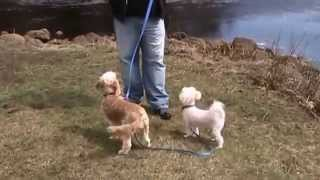 Dartmouth Ma Dog Training - Teaching Attention