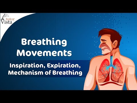 Breathing Movements - YouTube